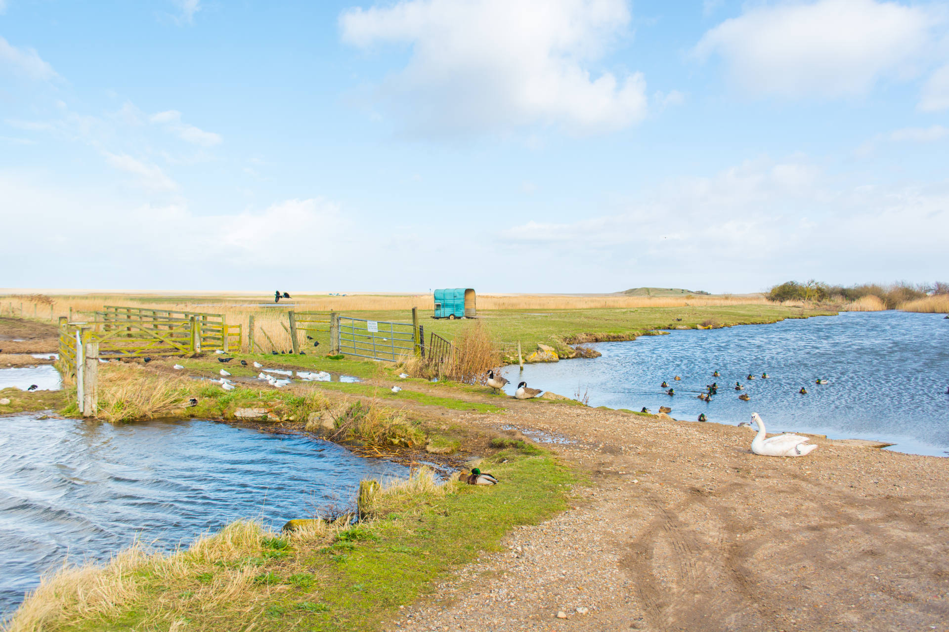 The salthouse marshes showing an array of birds and wildlife enjoying a sunny day.