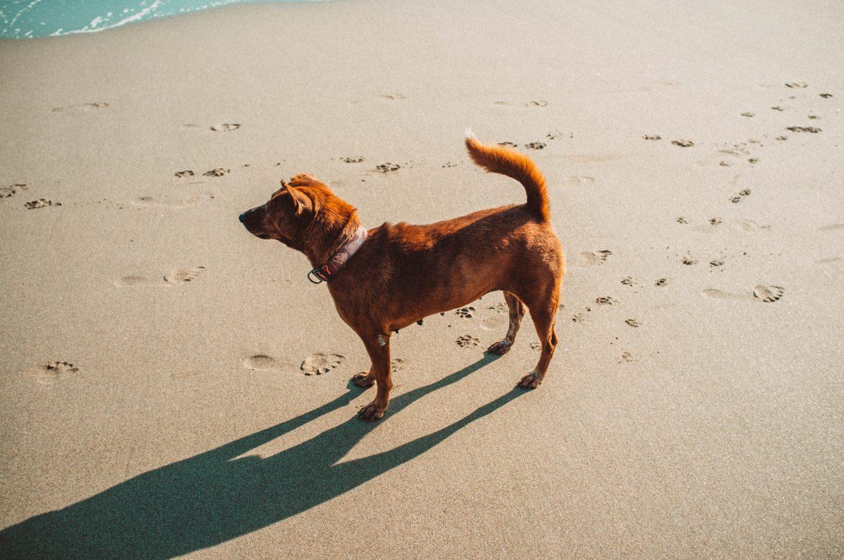 Dog on a sunny beach